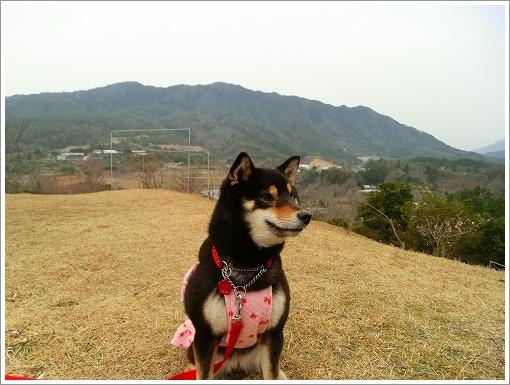 花みどり公園 (3)