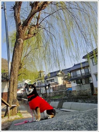 上下ひなまつり (22)