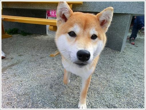 ドッグランひがしひろしま (8)