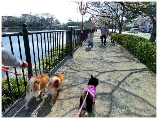 庄原上野公園