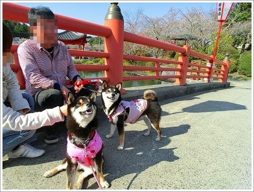 庄原上野公園 (2)
