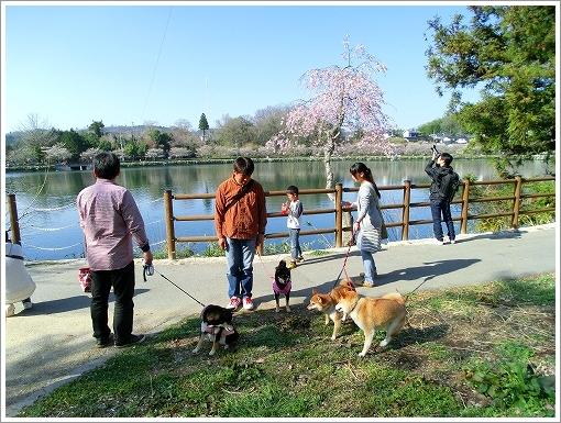 庄原上野公園 (5)