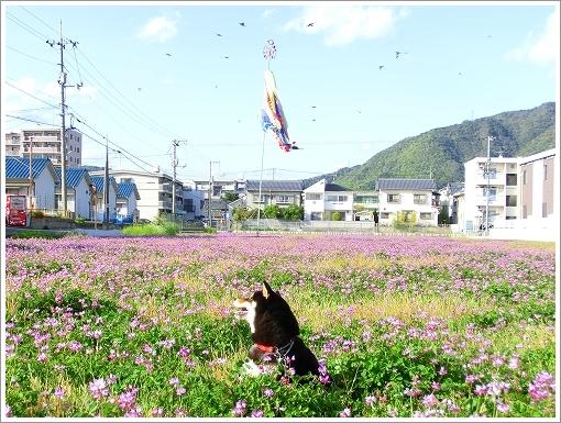 れんげ (2)