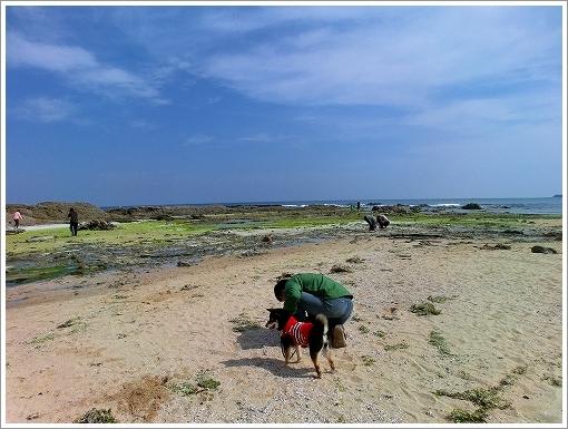 琴引浜 (2)