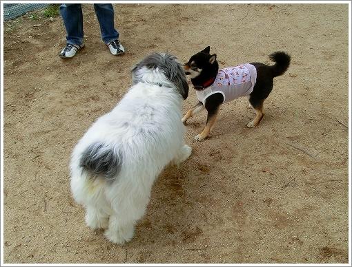竜王公園ドッグラン
