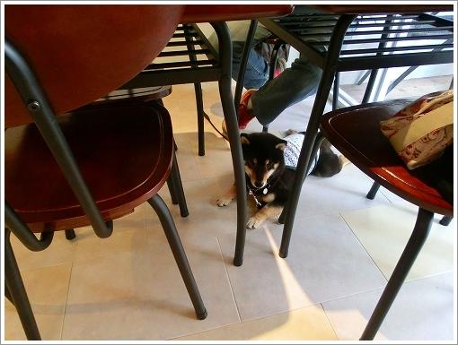 Buhi cafe (4)