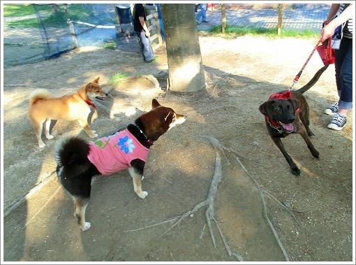 竜王公園 (9)
