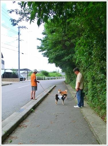 大和くんとお散歩