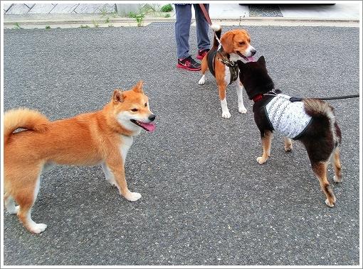 大和くんとお散歩 (9)