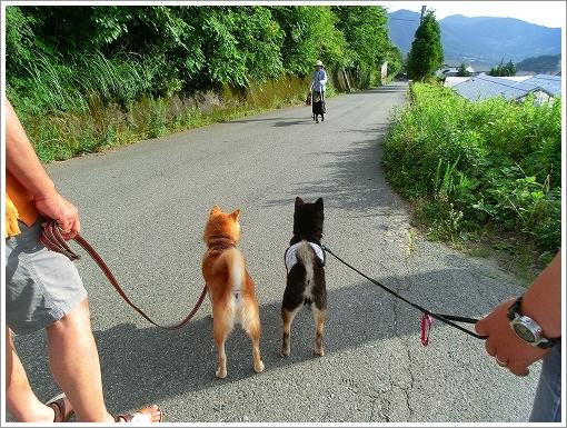 大和くんとお散歩 (7)