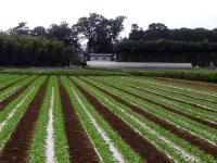 耕作地から見た収穫小屋
