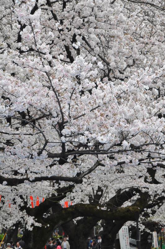 20130323上野