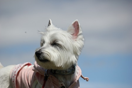 風とたいよう