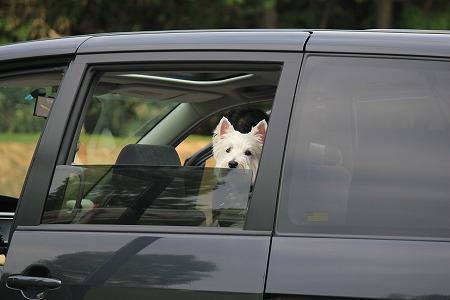 車からたいよう