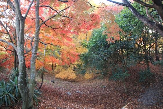 舟着場跡の紅葉
