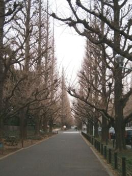2013-2-12絵画館通り