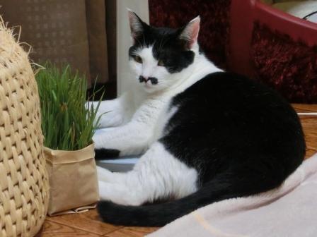 1251猫ツボ (2)