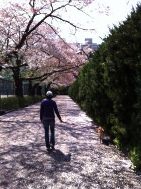2012-spring.jpg
