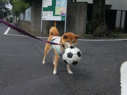 loves-ball3.jpg