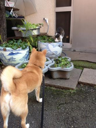 mame-vs-cat.jpg