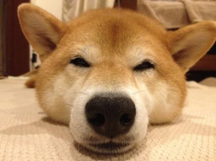 sleepysleepy.jpg