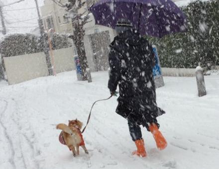 snowing-20130114.jpg