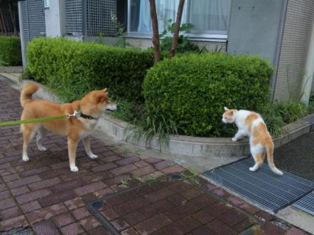 vs-cat.jpg