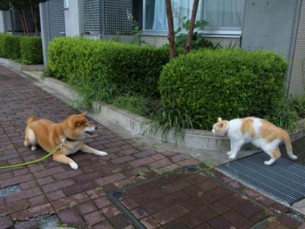 vs-cat2.jpg
