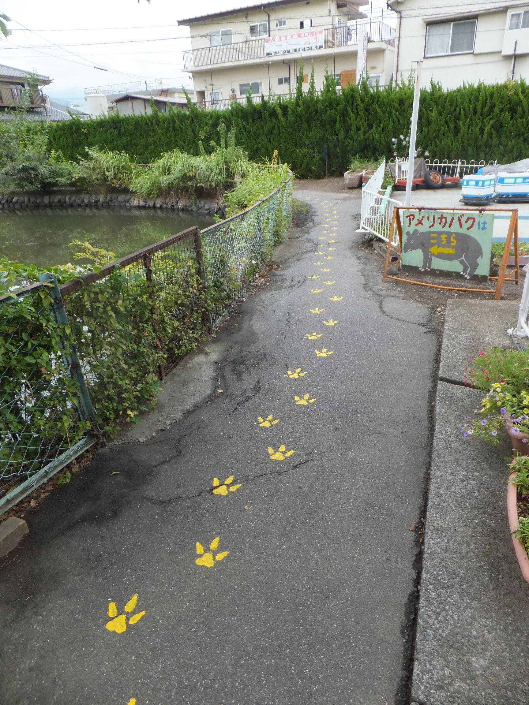 黄色い足跡がバクの住処に誘う