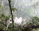 バードケージの雛たちは、ビニール傘で雨をしのぐ