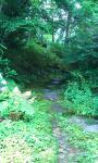 林の中・・・