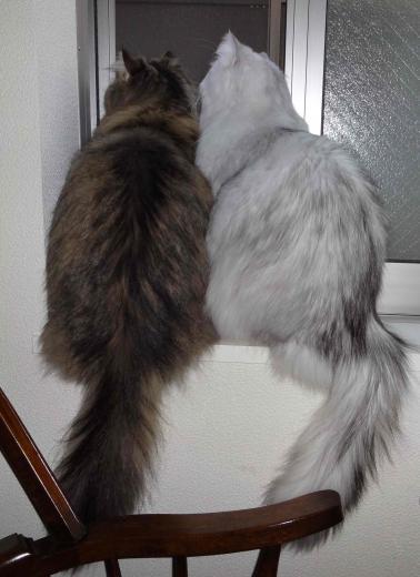 窓辺のケント&マイケル