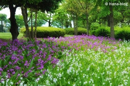 平成の森公園 175