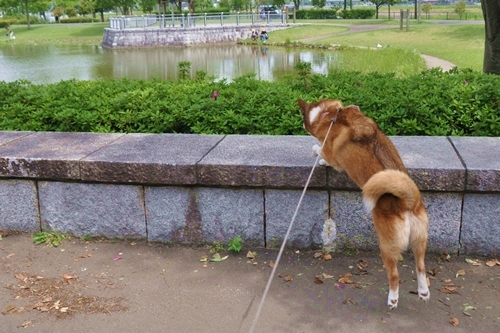 平成の森公園 095