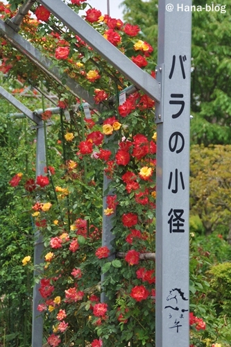平成の森公園 056