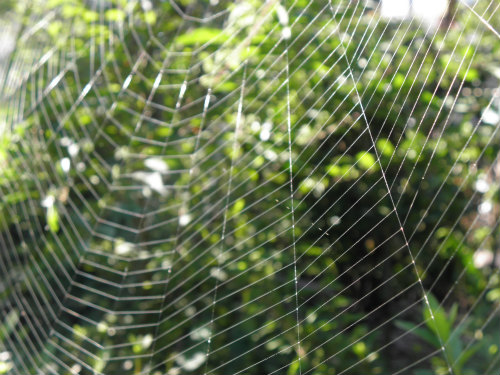 蜘蛛の巣 芸術品です。