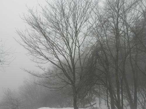 林道から見た靄の中の木々