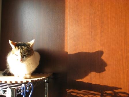 乙女さんの影~