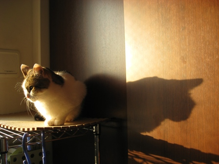 仔猫みたいな乙女さん♪