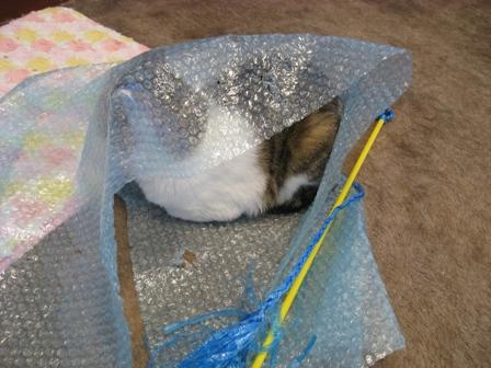 これ、ウチの猫