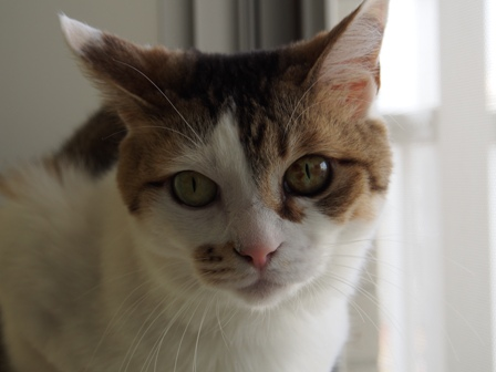 猫っぽい顔