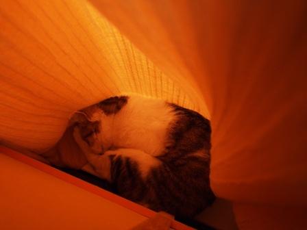 折り畳まれた猫