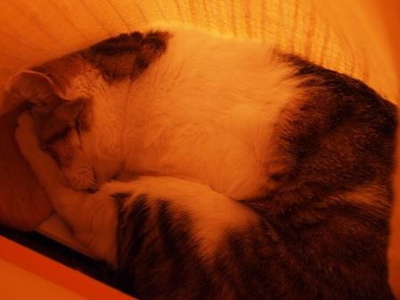 グーグー寝ています