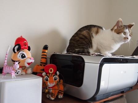乙女村の村猫