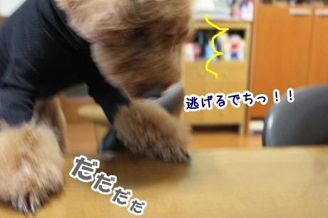 IMG_1089_20130423210032.jpg