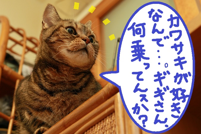 (3)_20130117114858.jpg