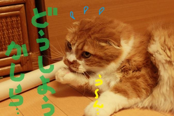 (5)_20130108015005.jpg