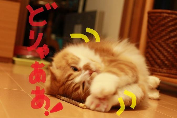 (6)_20121230190455.jpg