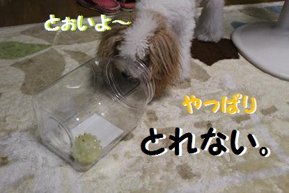IMG_2423.jpg