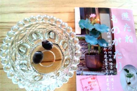 b_071.jpg